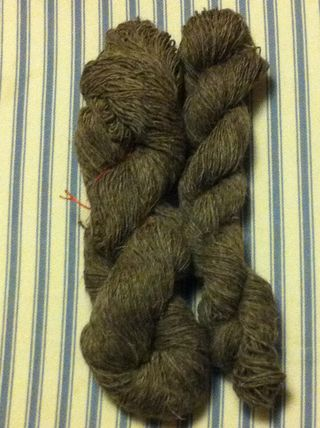 Grey suffolk